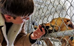 RESCUE DOGS SAVED FROM EUTHANIZATION