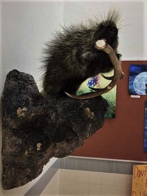 +Pictured+above+is+a+taxidermied+porcupine+done+by+sophomore+Matthew+Hobbs.+
