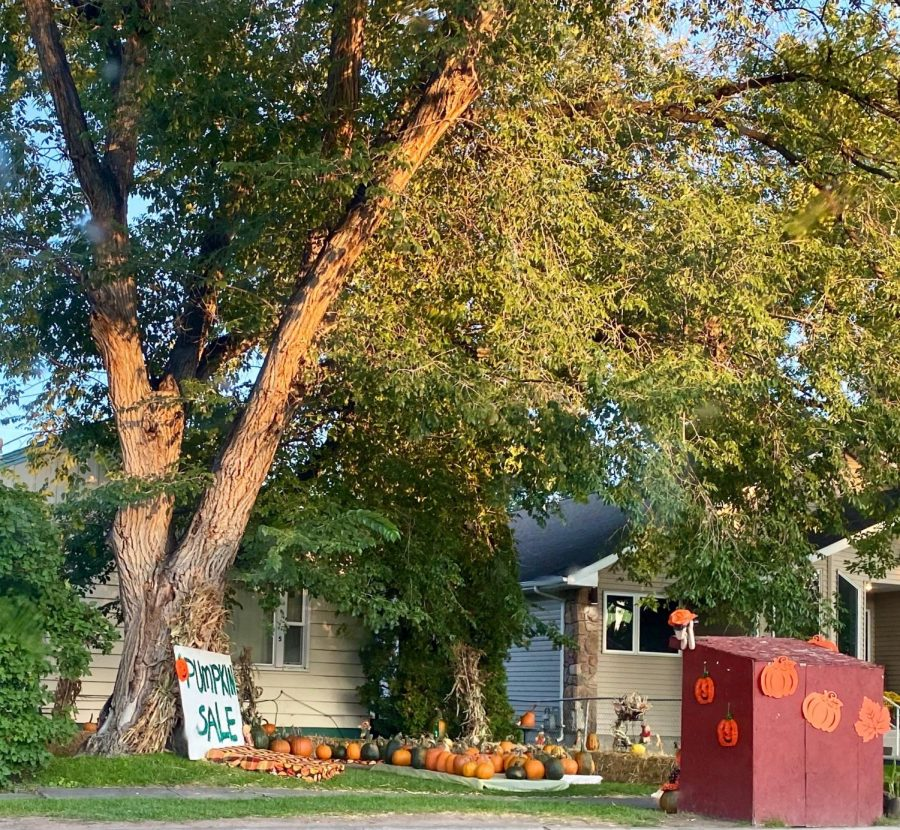 The Carters have begun their annual pumpkin sale in front of their home on Division street in Powell.