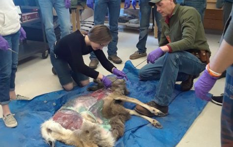Mrs. Wendy Smith's natural resources classes perform a necropsy on a buck with the assistance of officers from the Wyoming Game and Fish Department.