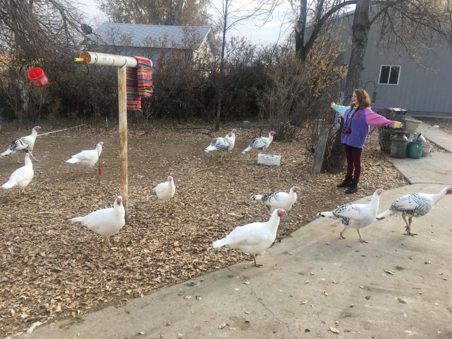 Prowl News Editor Lucyjane Crimm celebrates Turkey Thanking Day by thanking a group of turkeys.